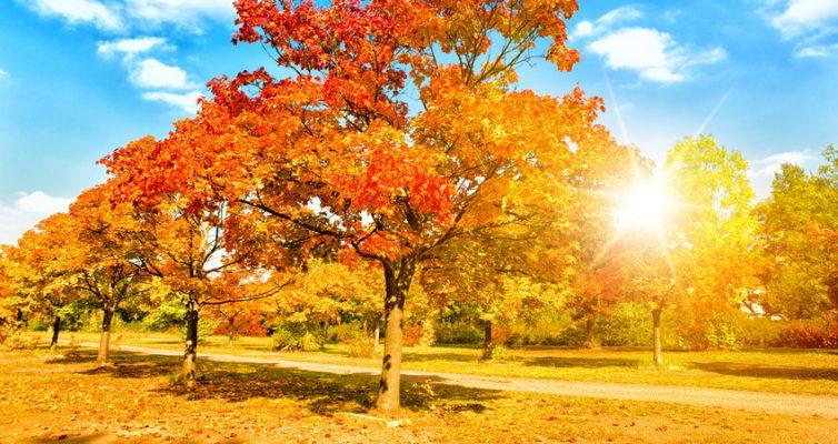 Münchner Parks, Urlaub in München im Herbst