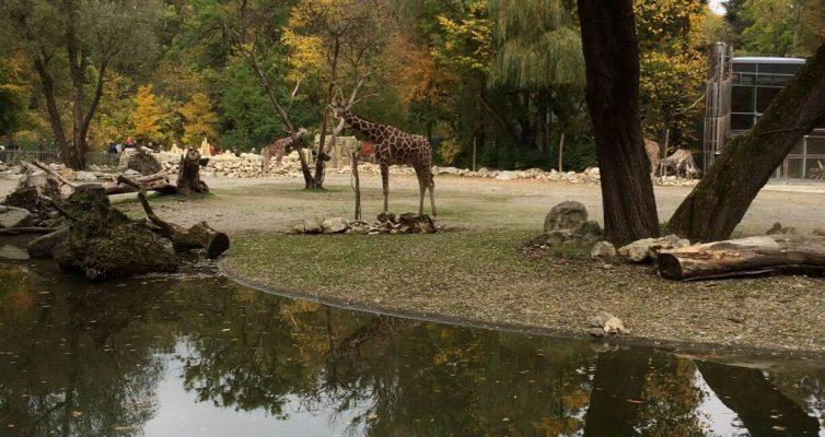 München bei Regen, Ein Kurzurlaub München mit Kindern im Zoo